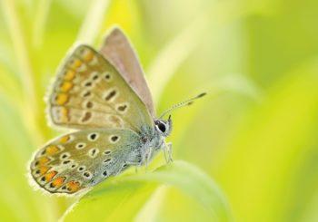 Méditation du papillon