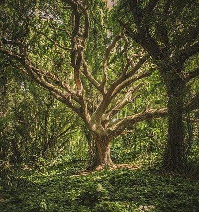 Ecothérapie : emmener les patients en pleine nature