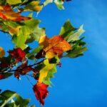 Ecothérapie – trois méditations d'automne